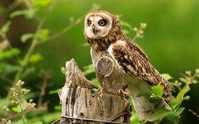 Wallpaper bird, leaves, stump, owl, background, twigs, green, look