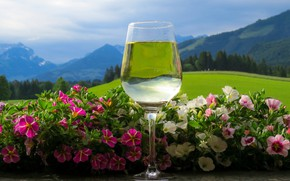 Picture greens, forest, summer, the sky, glass, clouds, landscape, flowers, mountains, nature, transparent, reflection, background, wine, …