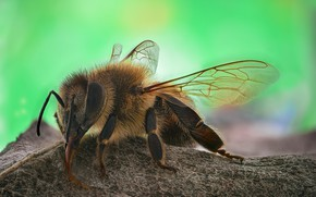 Picture macro, bee, insect
