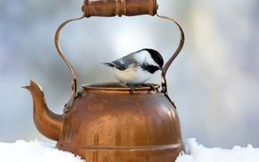 Picture winter, snow, background, bird, kettle, bokeh