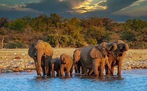 Picture the sky, clouds, light, trees, clouds, nature, shore, elephant, elephants, pond, a lot, the herd, …