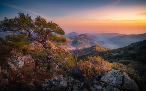 Picture landscape, mountains, nature, fog, tree, rocks, morning, pine, Cyprus