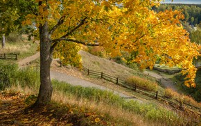 Picture autumn, nature, tree, the fence, track, maple, Plyos, Andrei