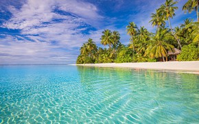 Picture beach, tropics, palm trees, the ocean, The Maldives, The Indian ocean