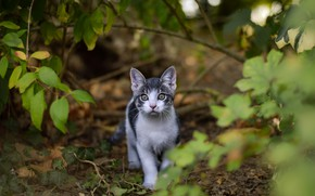 Picture greens, look, leaves, branches, nature, kitty, grey, baby, kitty, bokeh, white