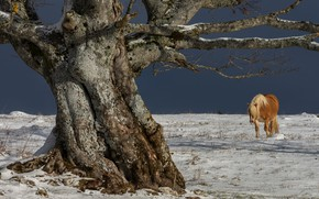 Picture winter, snow, branches, nature, tree, horse, horse, pony