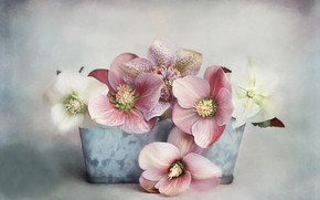 Wallpaper flowers, pot, digital art, hellebore