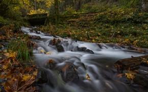 Picture autumn, forest, stream, Oregon, Oregon, Columbia River Gorge, The Columbia river gorge, Wahkeena Creek