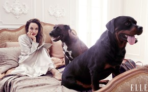 Picture dogs, look, woman, bed, Angelina Jolie, It