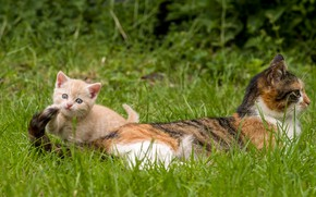 Picture grass, kitty, mom