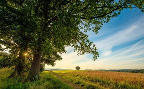 Picture field, the sky, landscape, nature, tree, beauty