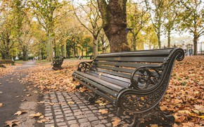 Picture autumn, leaves, trees, bench, Park, nature, park, autumn, leaves, tree, bench