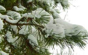 Picture winter, snow, nature, background, spruce, New Year, New year, bump, Christmas, bumps, widescreen, winter, background, …