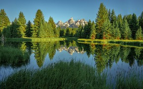 Wallpaper greens, forest, summer, trees, mountains, lake, reflection, Wyoming, Wyoming, Grand Teton National Park, Rocky mountains, ...
