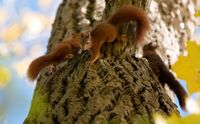 Picture animals, nature, tree, animals, pair, proteins, rodents