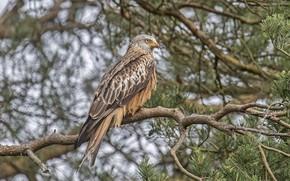 Picture tree, bird, predator, hawk