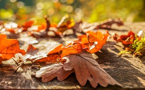 Picture autumn, leaves, bokeh
