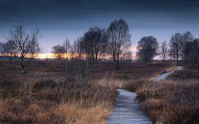 Picture field, track, birch