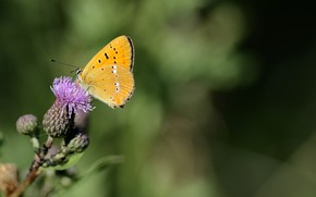 Picture flower, summer, butterfly, thorn