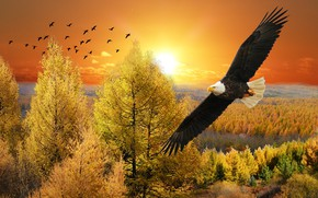 Picture autumn, forest, the sky, look, the sun, clouds, trees, flight, landscape, sunset, birds, nature, rendering, …
