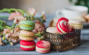 Picture colorful, cookies, macarons