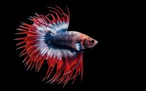 Picture macro, fish, fish, background