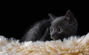 Picture cat, kitty, grey, lies, fur, black background, kitty