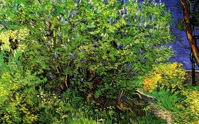 Picture grass, Bush, Vincent van Gogh, Lilacs