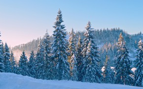 Picture winter, forest, the sky, the sun, snow, trees, blue, ate