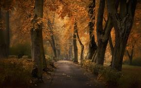 Picture trees, dog, park, autumn