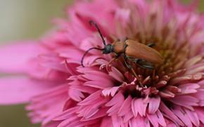 Picture flower, legs, beetle, morning, antennae