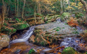 Picture autumn, forest, trees, stream, stones, stream
