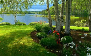 Picture summer, grass, the sun, flowers, lake, shore