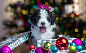 Picture balls, glare, box, gift, baby, Christmas, puppy, New year, doggie, Бернедудель