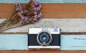 Picture flowers, The camera, lavender