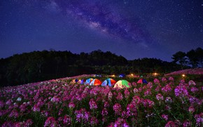 Picture flowers, night, meadow, tents