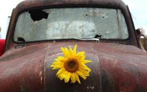 Picture machine, background, sunflower