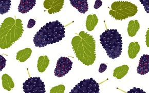 Picture berries, texture, white background, BlackBerry