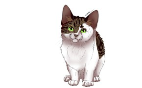 Picture cat, cat, white background, kitty, kitty