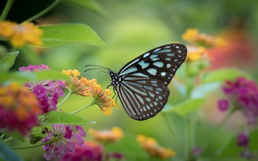 Picture butterfly, flowers, butterfly