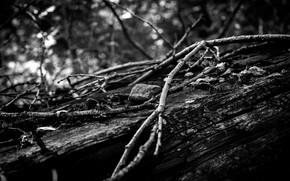 Picture Nature, Stone, Black and white