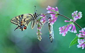 Picture butterfly, a couple, flowers