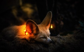 Picture light, Fox, light bulb, ears, Fenech