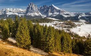 Picture snow, trees, mountains, Italy, South Tyrol, Dolomites, Sassolungo