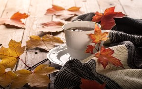 Picture autumn, leaves, background, colorful, maple, wood, autumn, leaves, cup, coffee, a Cup of coffee, maple