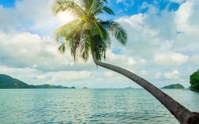 Picture sea, beach, summer, the sky, the sun, palm trees, shore, summer, beach, sea, seascape, beautiful, …