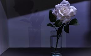 Picture flower, purple, glass, light, flowers, glass, background, dark, rose, shadow, stem, Bud, white