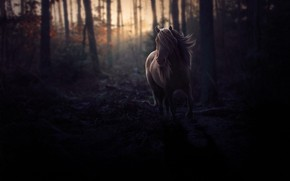 Picture FOREST, HORSE, MANE, TWILIGHT