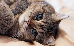 Picture cat, cat, look, face, pose, grey, background, portrait, bed, lies, basket, striped, cutie, green eyes, …