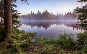 Picture forest, fog, shore, pond
